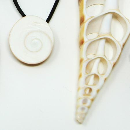 "Shells & Gooseneck barnacles ""Percebes"""